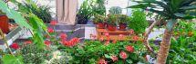 Zarasų žemės ūkio mokyklos žaliosios edukacinės erdvės