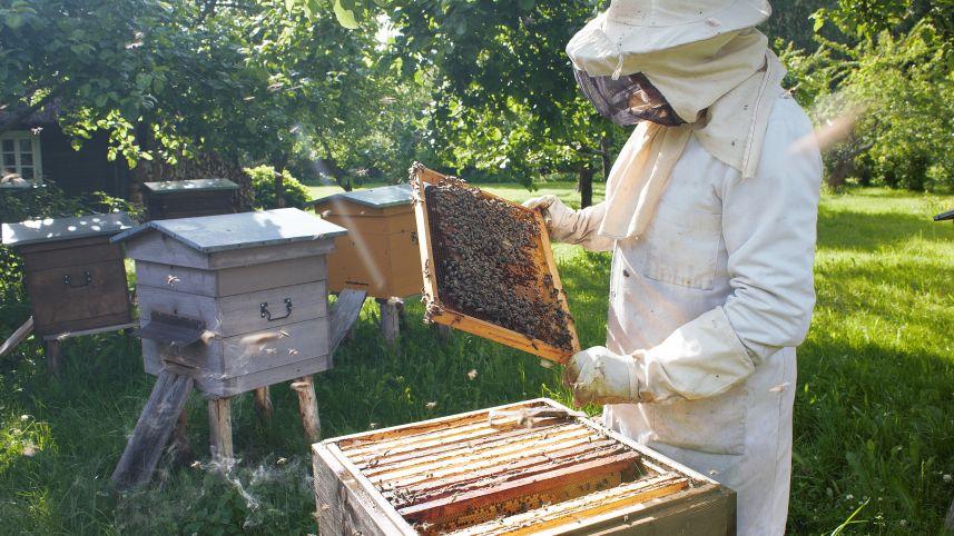 Ką bitės veikia avilyje?